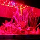 LEDs-e-Vegetais---Um-abraco---Drauzio-Milagres---O-Mundo-no-Seu-Dia-a-Dia